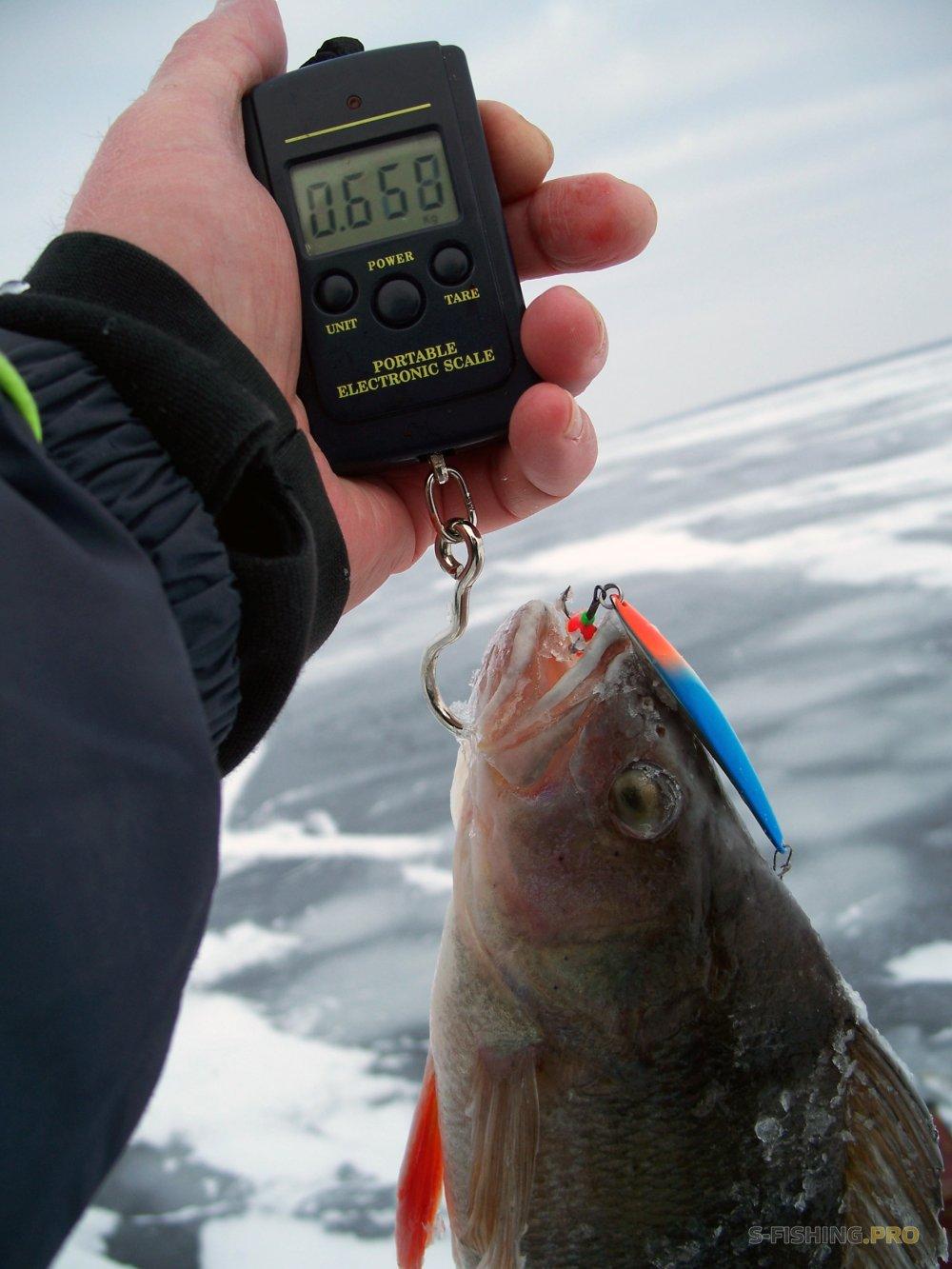 Отчеты с водоемов: ECO номная  рыбалка  PRO должается  с   блесной SPY 70 BLS