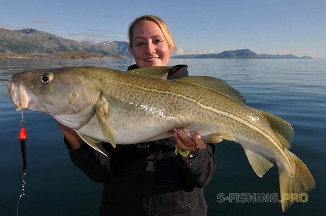 World Fishing Tackle: Открой для себя морскую рыбалку в Норвегии или Баренцевом море