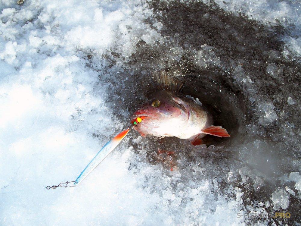 EcoGroup - эксклюзивный представитель брендов Maximus, Alaskan, LureMax, PowerPhantom, BlackSide, EcoPro, Saykio: Рыбалка в глухозимье PRO веренной блесной SPY 70BLS.