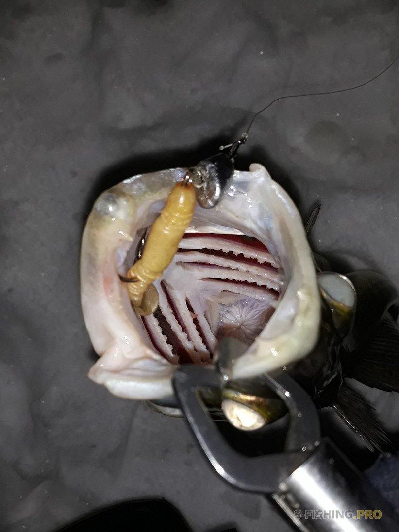 Отчеты с водоемов: Рыбалка 6 марта и ночной судак