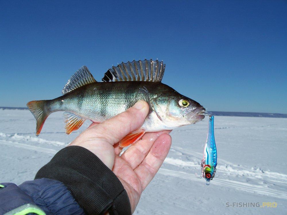 EcoGroup - эксклюзивный представитель брендов Maximus, Alaskan, LureMax, PowerPhantom, BlackSide, EcoPro, Saykio: PRO должение знакомства рыбалкой виба ARISAKA 65 от ECOPRO