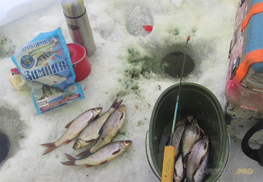 Отчеты с водоемов: Трудовая плотва на Ладожском озере.