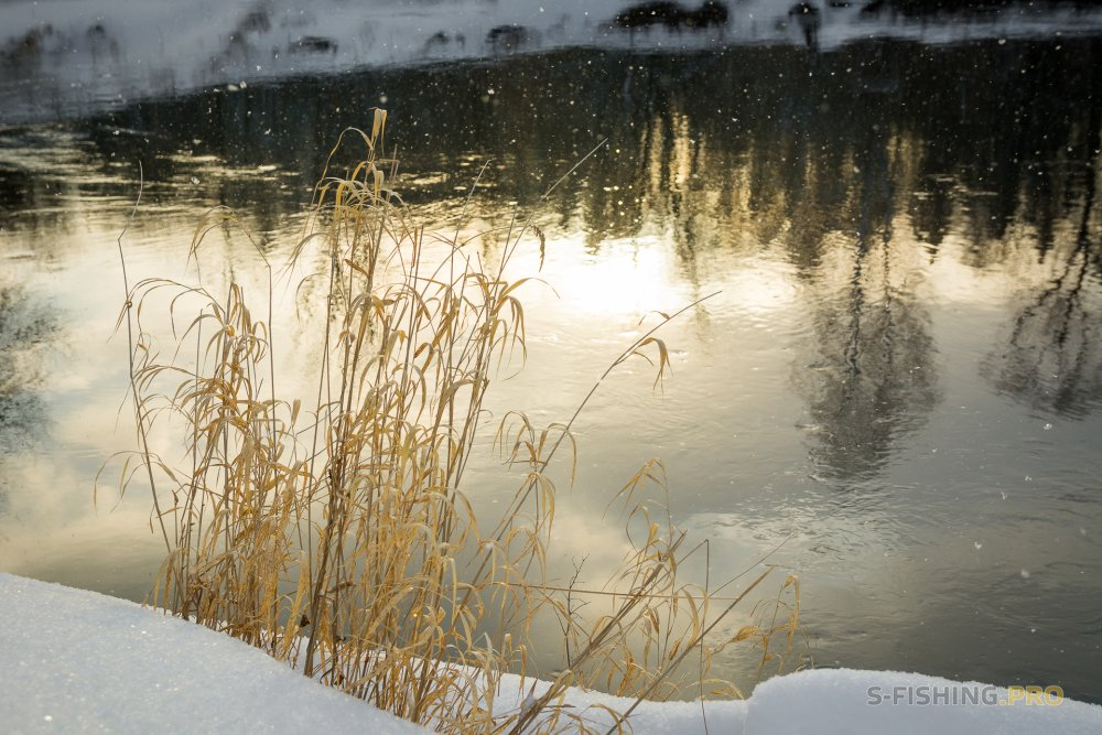 Отчеты с водоемов: Ловим ночью судака...