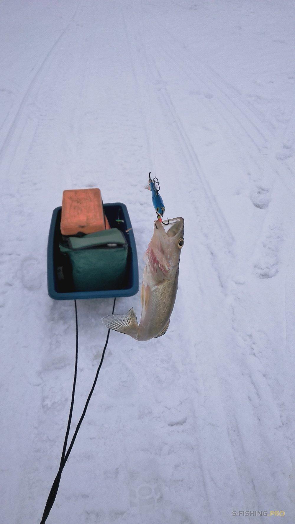 EcoGroup - эксклюзивный представитель брендов Maximus, Alaskan, LureMax, PowerPhantom, BlackSide, EcoPro, Saykio: Запутанная рыбалка!