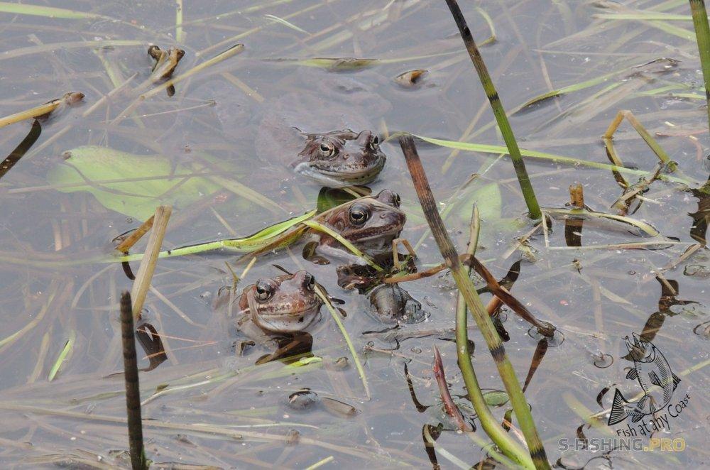 Блог им. FaaC: Весна..домашние водоемы..