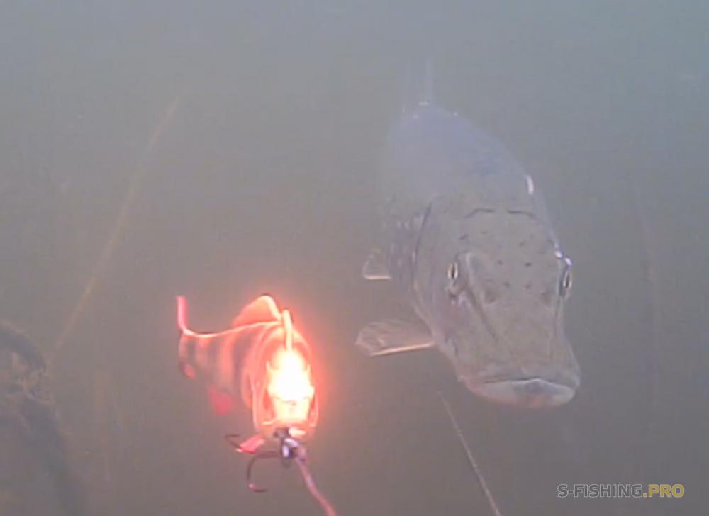 Экипировка: Тайная жизнь подводных обитателей.