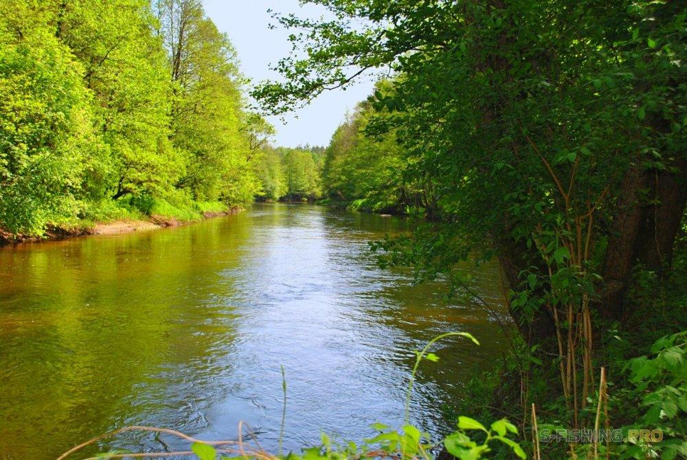 Отчеты с водоемов: Голавль мечты