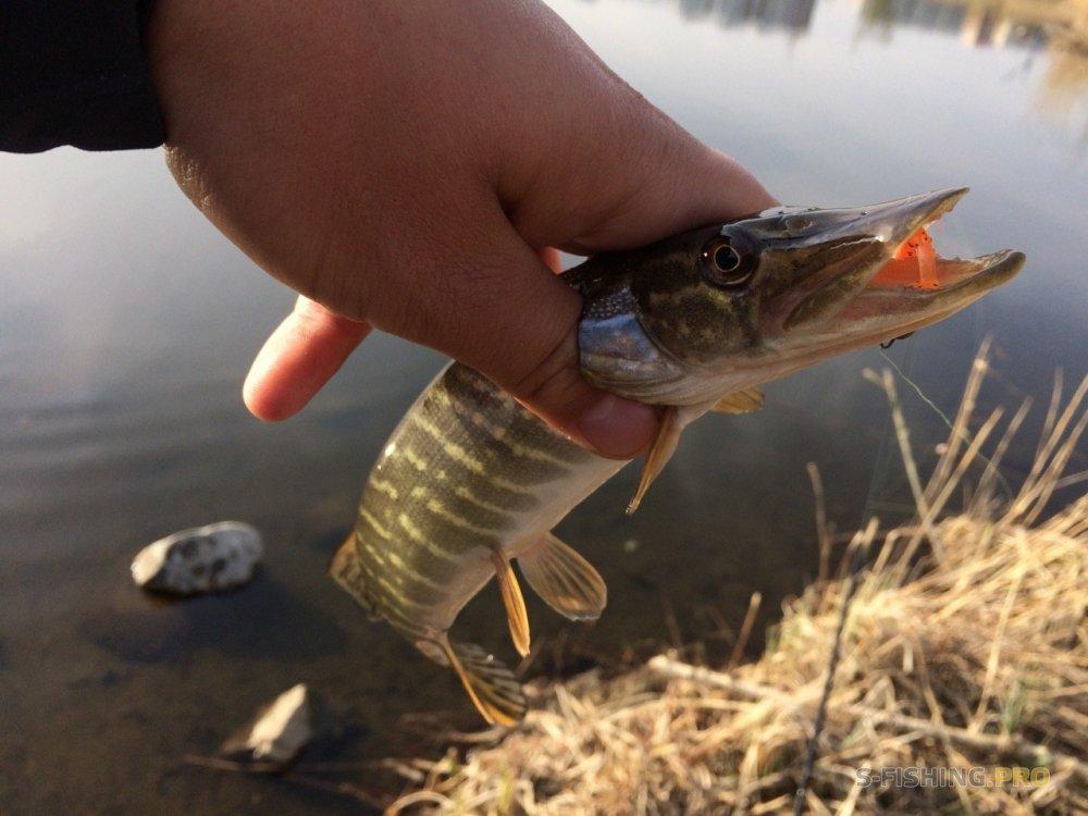Микроджиг и все что с ним связано: В поисках рыбы на Миассе
