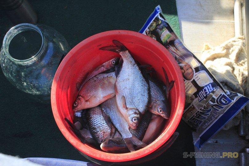 Отчеты с водоемов: Форт Павел I и рыбалка.