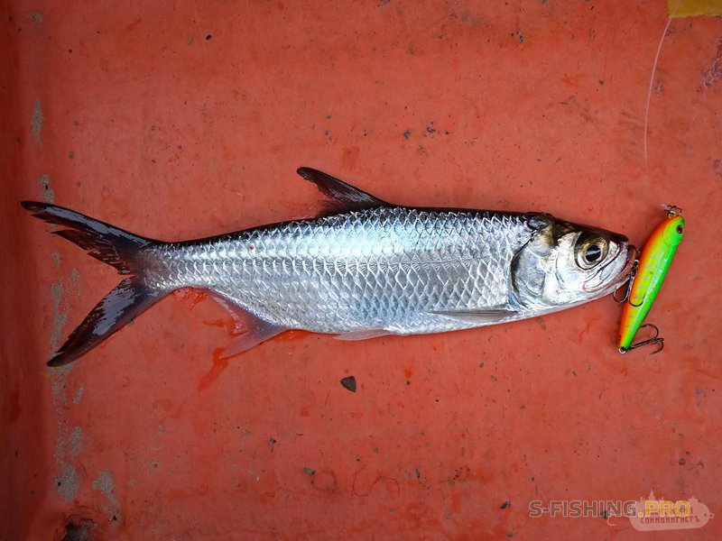 Отчеты с водоемов: Рыбалка на Шри-Ланке 01.05 — 08.05 2018