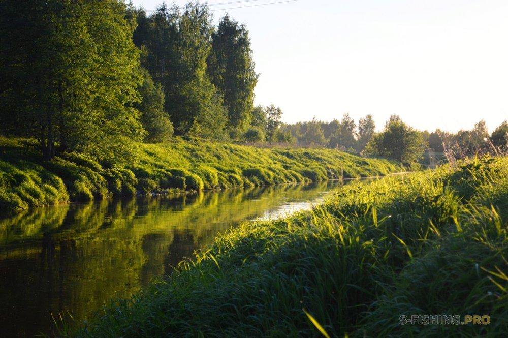 Отчеты с водоемов: Выезд за голавлями на дальняк