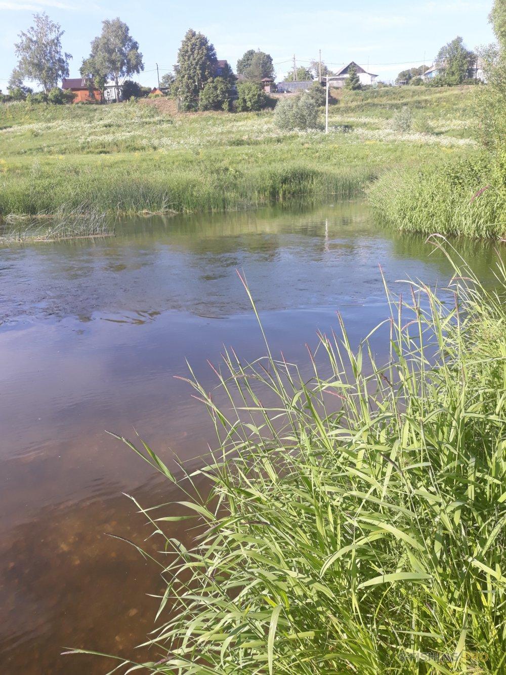 Отчеты с водоемов: Голавлики на Протве