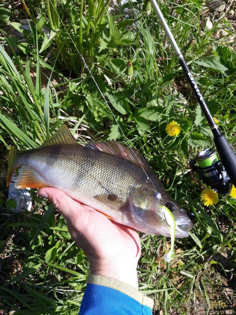 Отчеты с водоемов: Рыбалки 18-19 июня