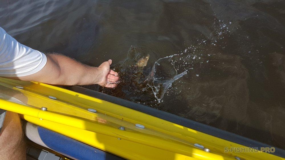 Отчеты с водоемов: В жару за судаком...