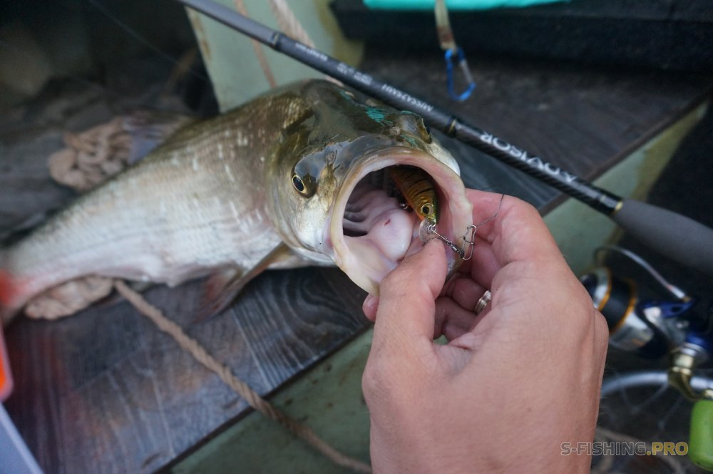 Отчеты с водоемов: Рыбалка нон стоп