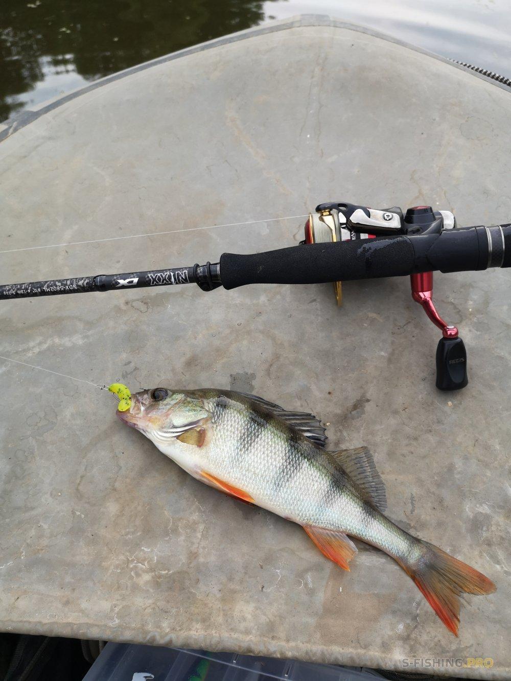 Отчеты с водоемов: Рыбалка между дождей