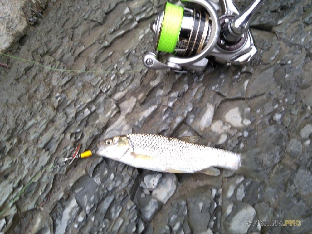 Отчеты с водоемов: Рыбалка на реке Сочи