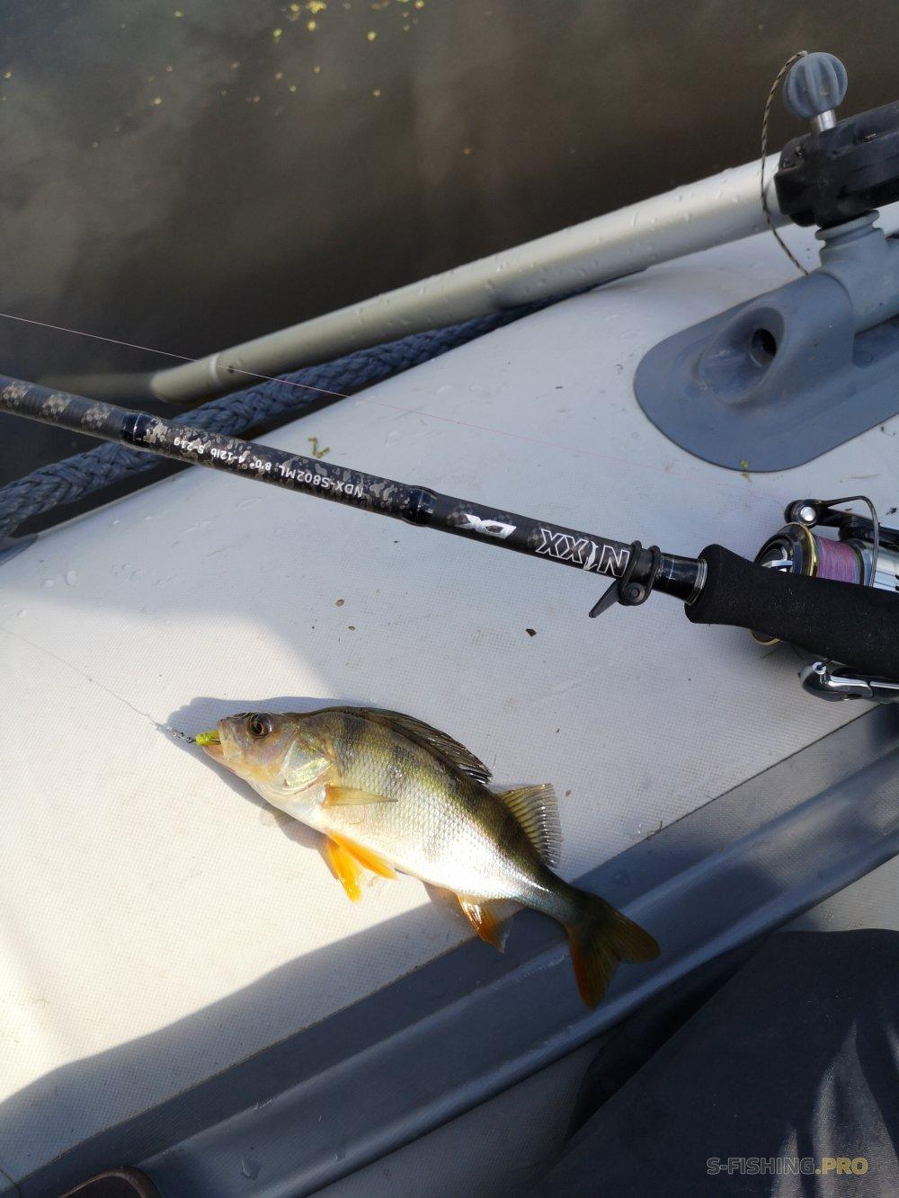 Отчеты с водоемов: Рыбалка воскресного утра