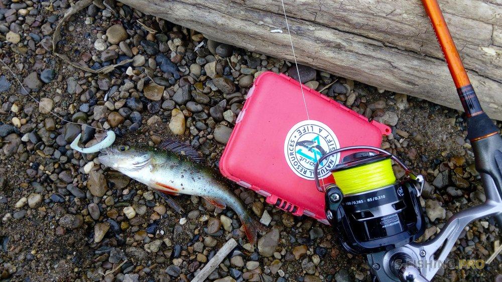 Отчеты с водоемов: В поисках новых мест. Городская рыбалка.