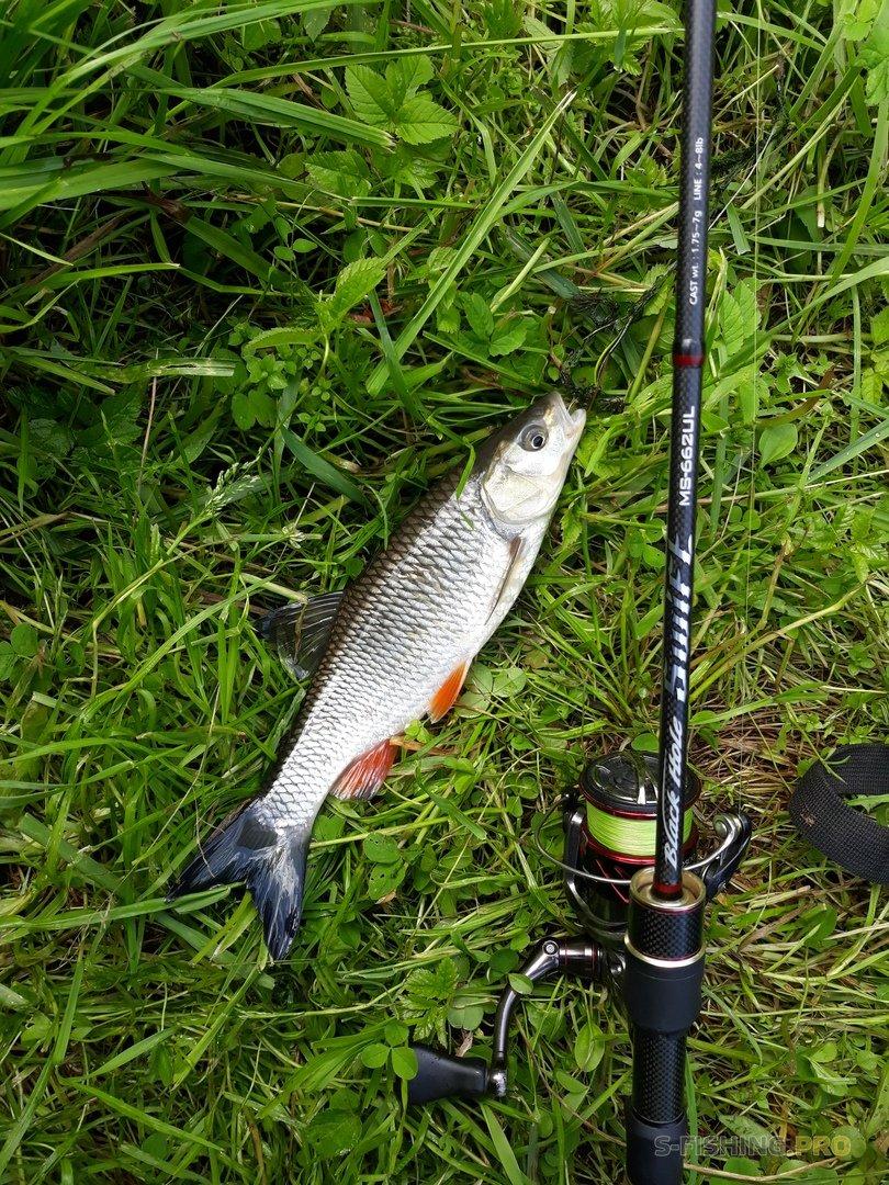 Отчеты с водоемов: Июльская рыбалка