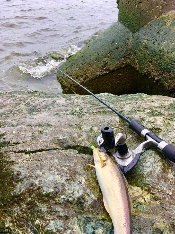 Отчеты с водоемов: рокфишинг в бесклевье