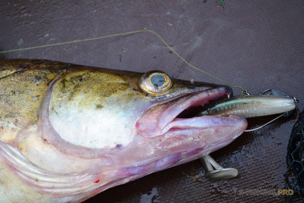 Отчеты с водоемов: Счастливый рыболов.