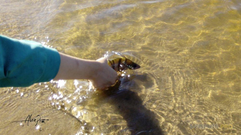 Отчеты с водоемов: Пляжная вечеринка -2
