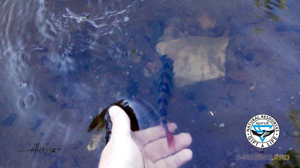 Отчеты с водоемов: Другая сторона реки.