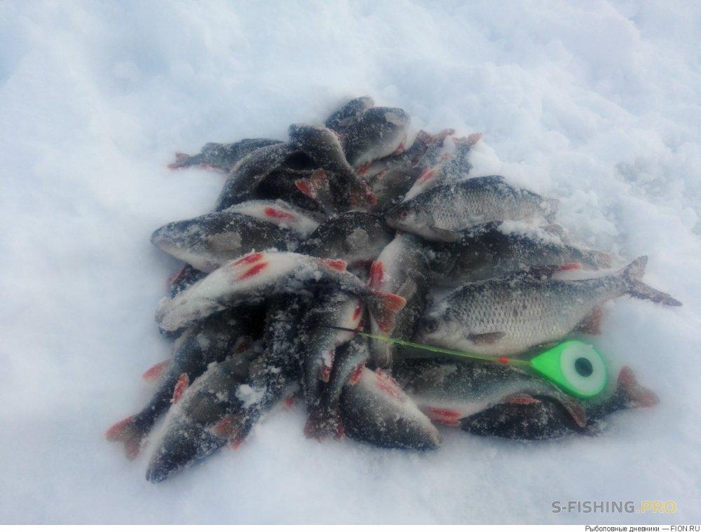 Отчеты с водоемов: Отчет о рыбалке: 17 декабря 2016 - 21 декабря 2016, Волга (Горьковское водохранилище)
