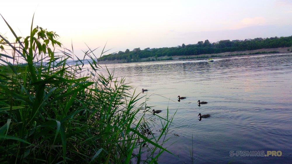 Отчеты с водоемов: На рыбалку с Тамерланом