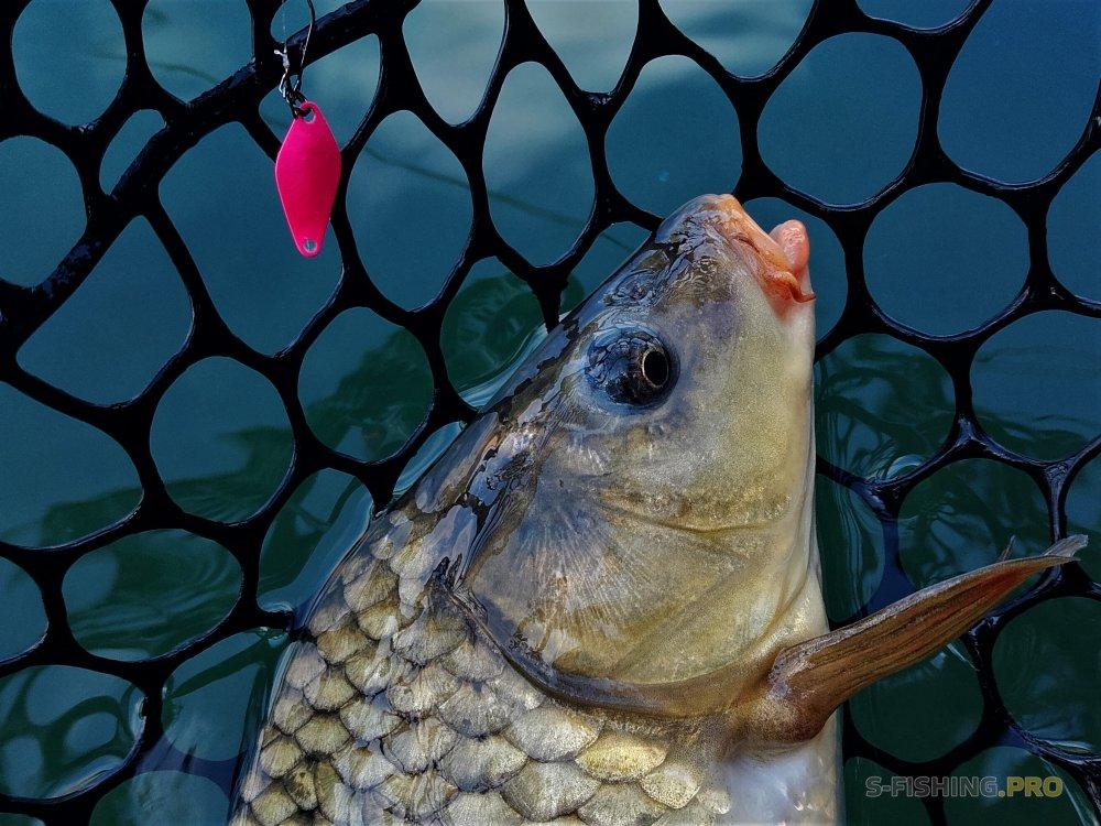 REDFISH CLUB | St.Petersburg Area Fishing Club: Лови Отпускай на «Царской Рыбалке», или тренировка 29.07.18.
