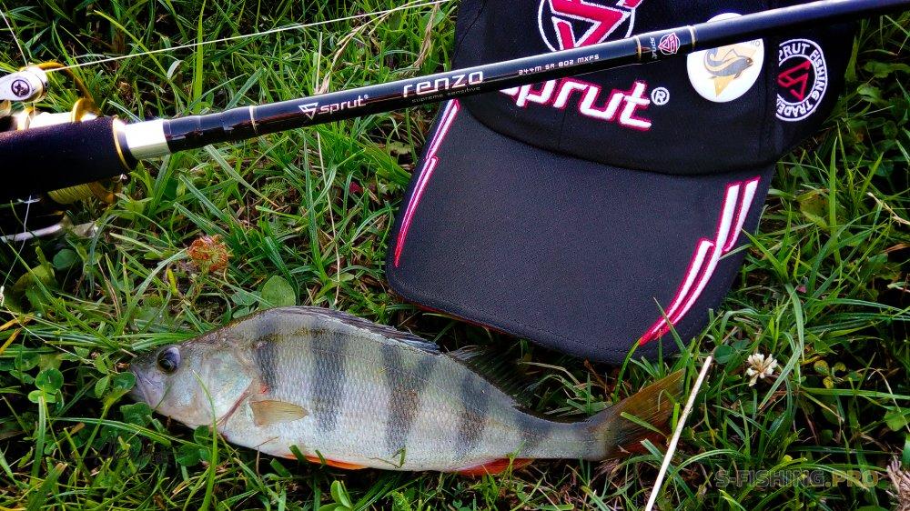 Блог им. AlexPi: Рачок сделал рыбалку.