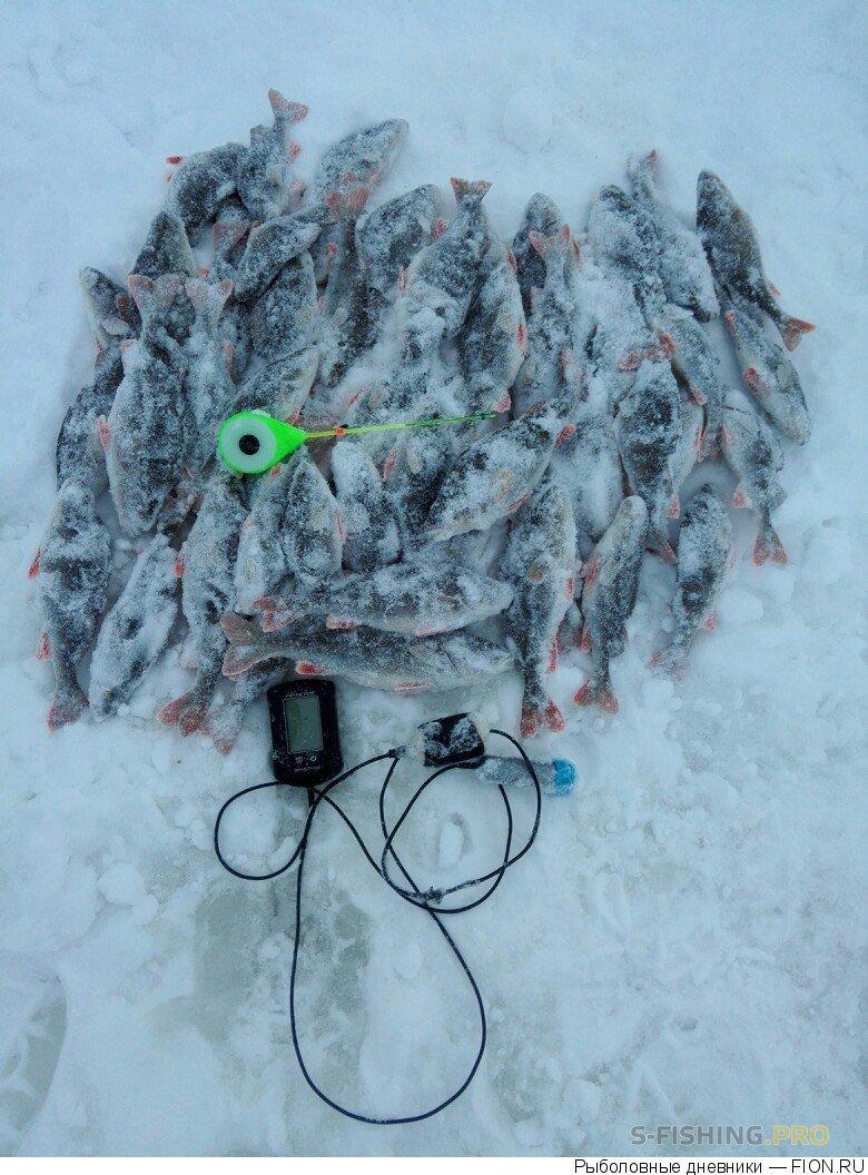 Отчеты с водоемов: Отчет о рыбалке: 17 января 2017 - 17 января 2017, Волга (Пучеж)