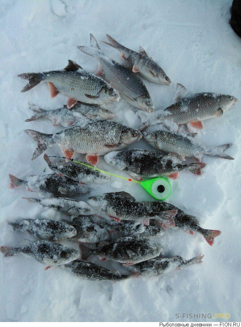 Отчеты с водоемов: Отчет о рыбалке: 21 января 2017 - 22 января 2017, Волга (Горьковское водохранилище)