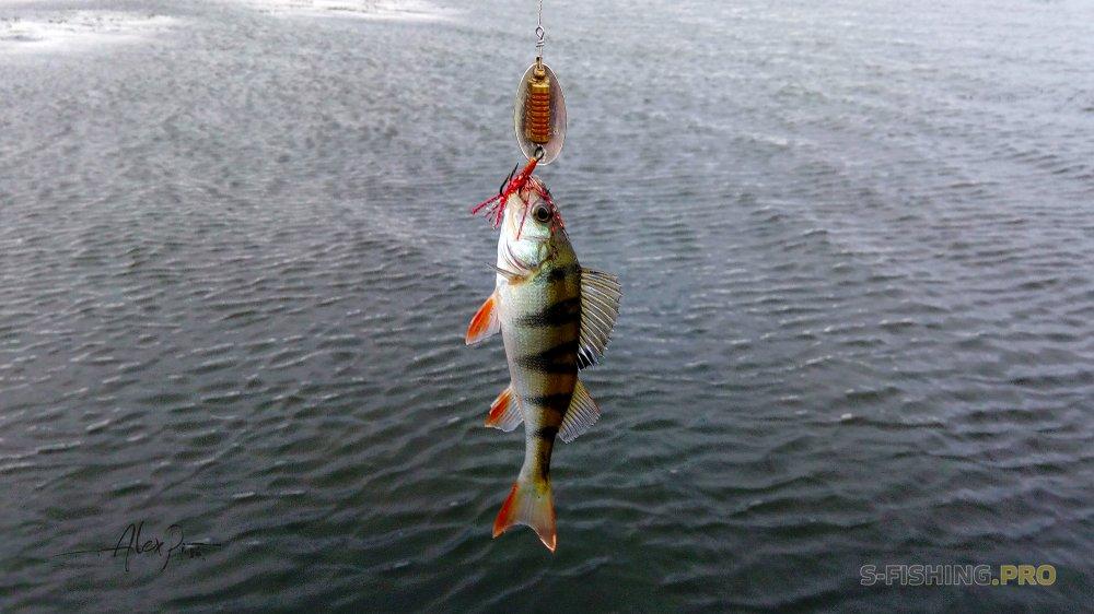 Отчеты с водоемов: Долгожданная рыбалка на водохранилище.