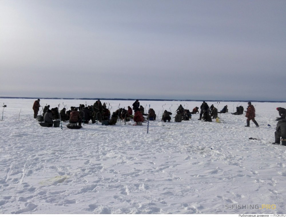 Отчеты с водоемов: Отчет о рыбалке: 18 февраля 2017 - 19 февраля 2017, Волга Горьковское водохранилище.