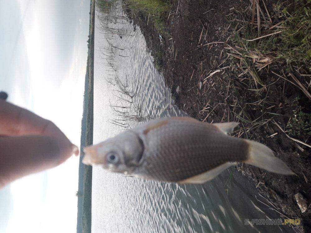 Отчеты с водоемов: Две поездки в разные дни. Карасёвая и Relax...совская рыбалка
