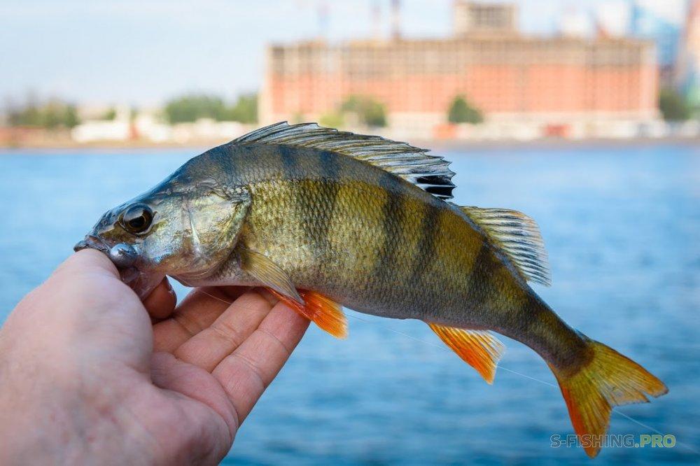 Отчеты с водоемов: Отличный вечер на рыбалке.