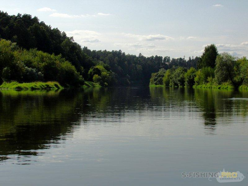 Отчеты с водоемов: Голавли и жужики, 18.08