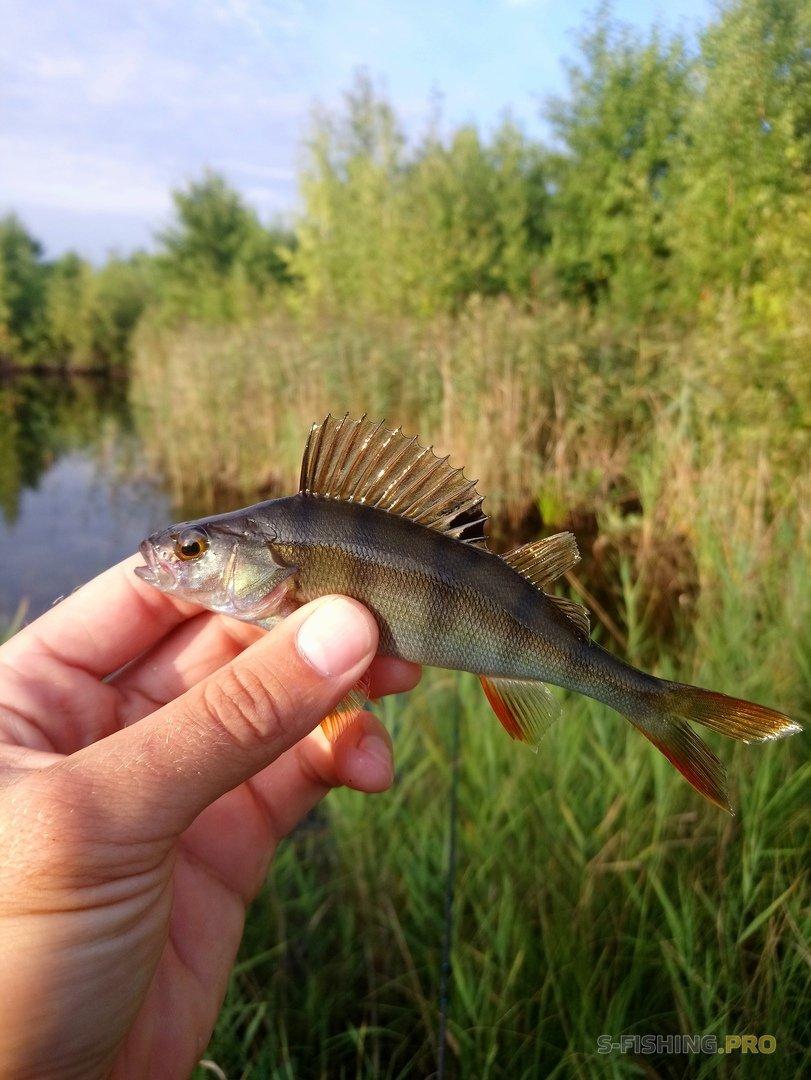 Отчеты с водоемов: Рыбалка в фотографиях.