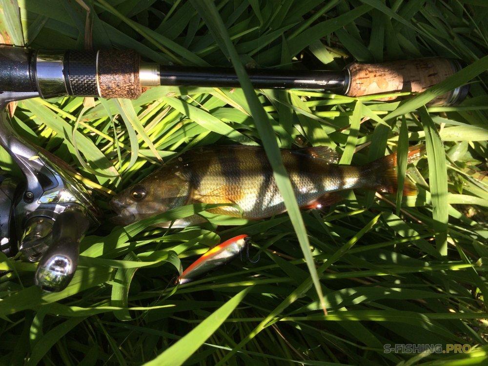 Отчеты с водоемов: Хищник на жабовнике в конце лета.