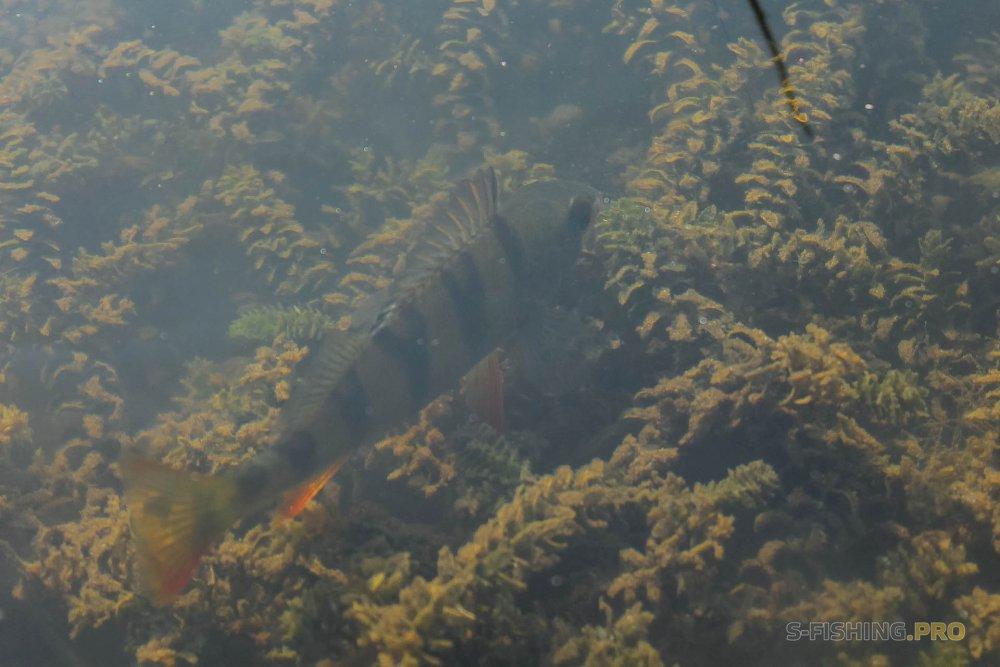 Отчеты с водоемов: Окунь на мормышку