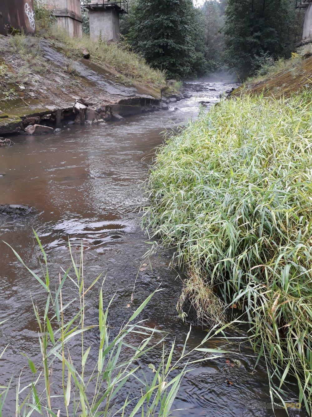 Отчеты с водоемов: форелька под ж\д мостом