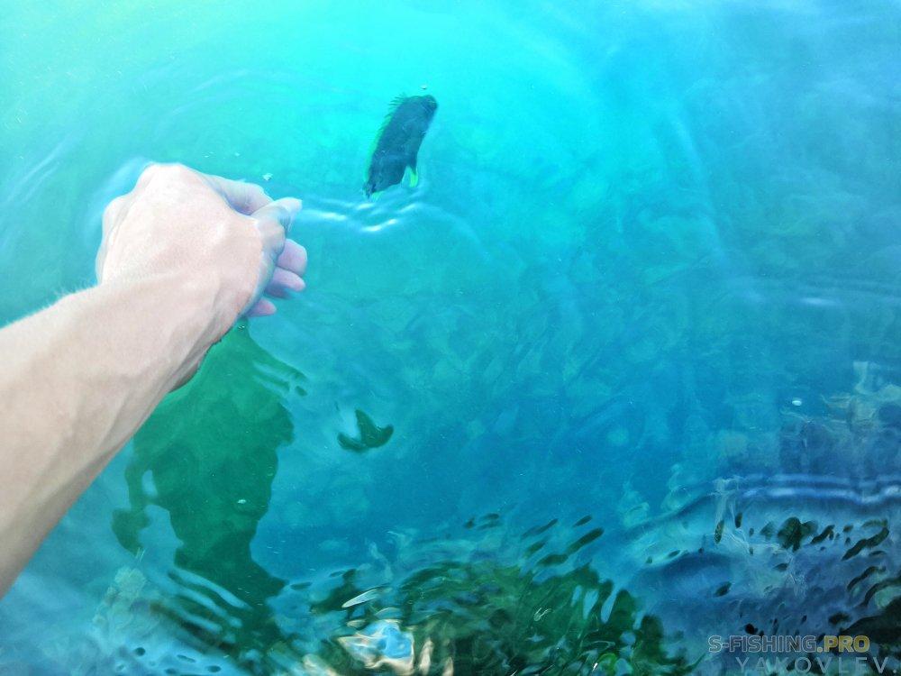 EcoGroup - эксклюзивный представитель брендов Maximus, Alaskan, LureMax, PowerPhantom, BlackSide, EcoPro, Saykio: Рокфишинг в Кабардинке. Часть 4. Карась, собачка и скорпены
