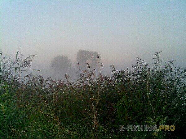 Отчеты с водоемов: Окуневое утро!