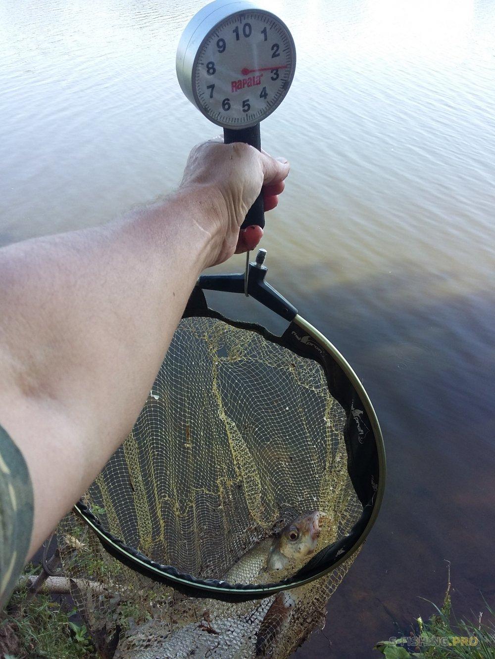 Отчеты с водоемов: Избиение сопливых
