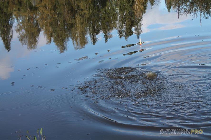 Отчеты с водоемов: Грозы на Ладоге а щуки клюют.