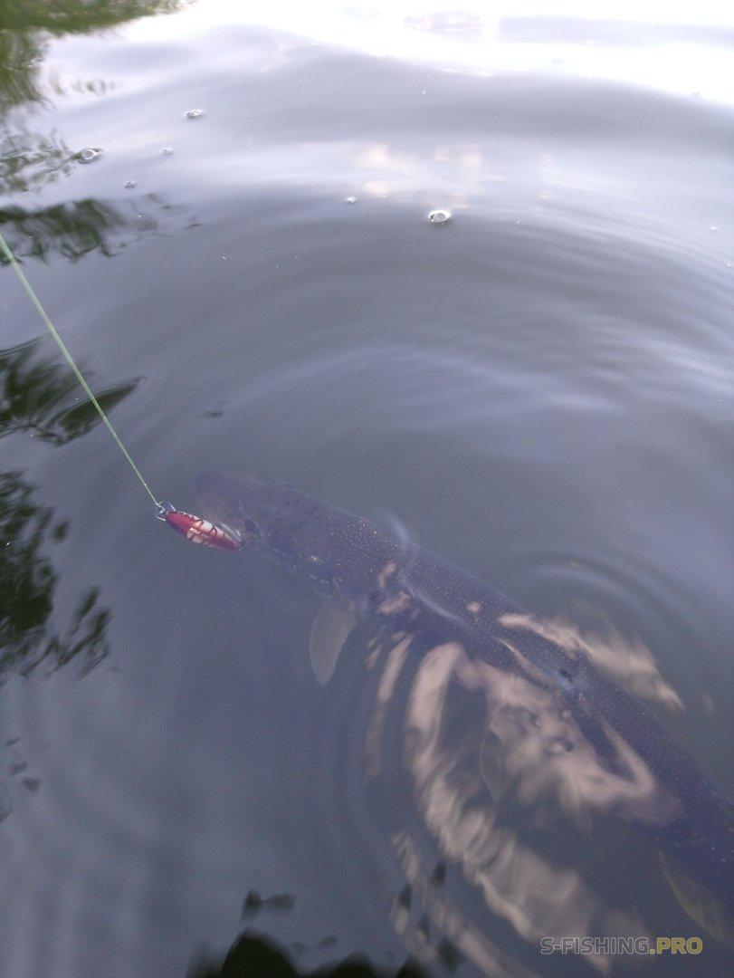 Отчеты с водоемов: Двухчасовая рыбалка.