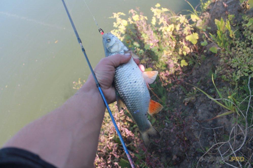 Отчеты с водоемов: Неплохая рыбалка на р Дон