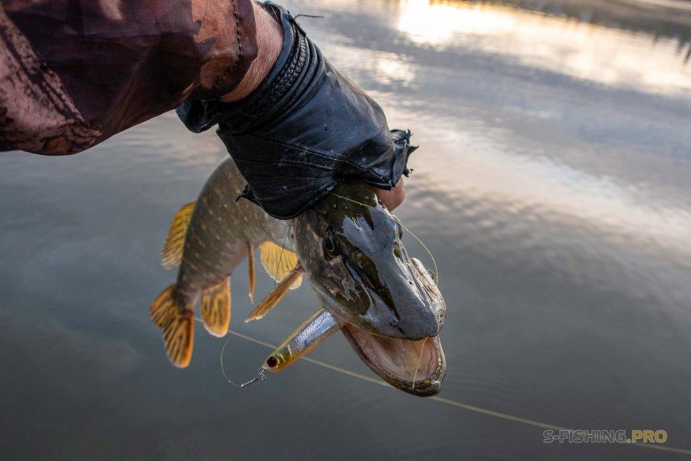 Отчеты с водоемов: Осень. Ловля в жабовниках.